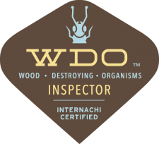Boulder Termite Inspection